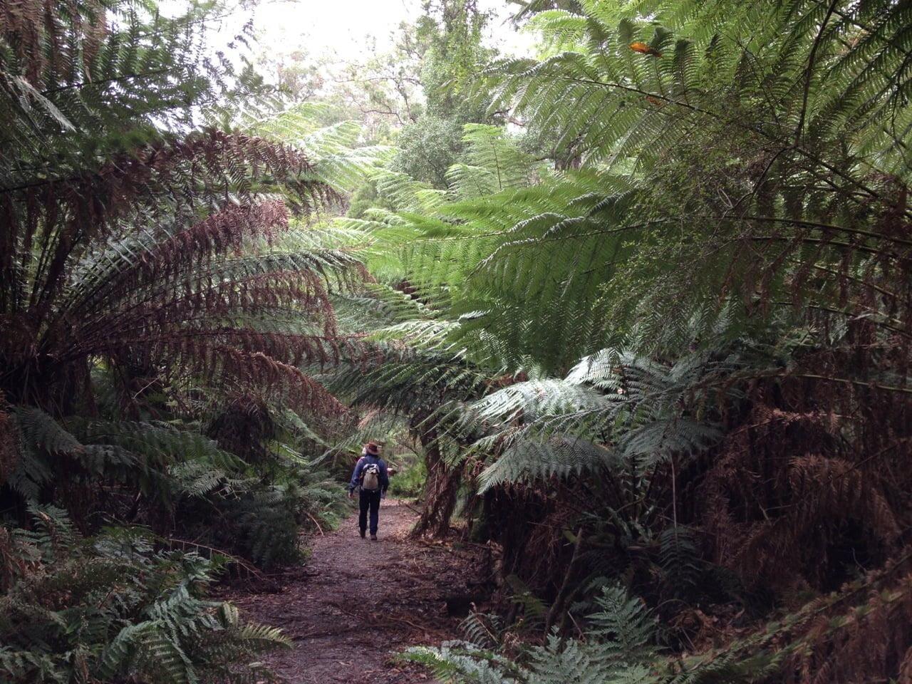Feed native birds in an australian rainforest woman for Australian rainforest