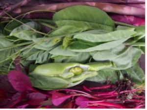 Glenmore House garden produce