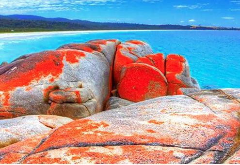 Bin along Bay, Tasmania
