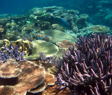 Coral Gardens - photo courtesy of Great Barrier Reef Marine Park Authority