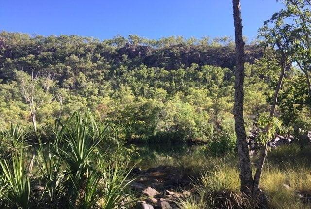 Vegetation pool